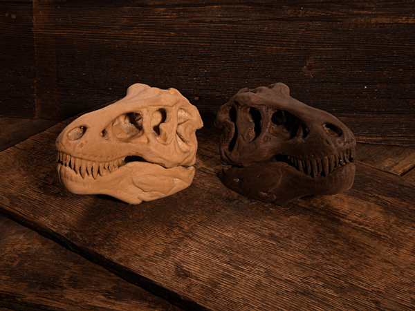 T Rex Skull by Makerbot  printed in Formfutura's Coconut and Pine Filament